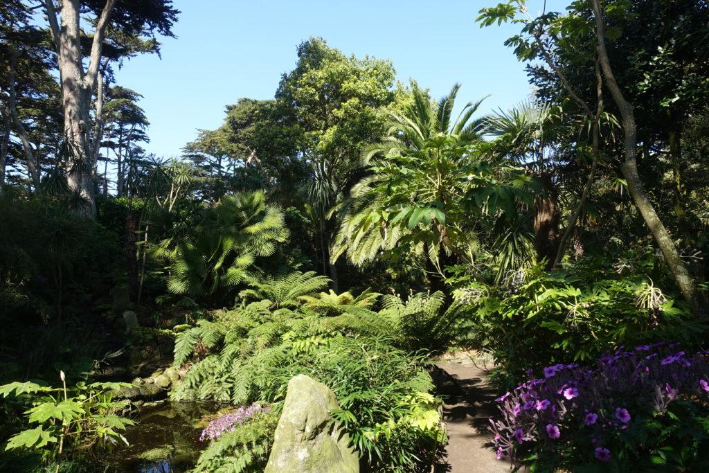 Végétation luxuriante sur l'Île-de-Batz