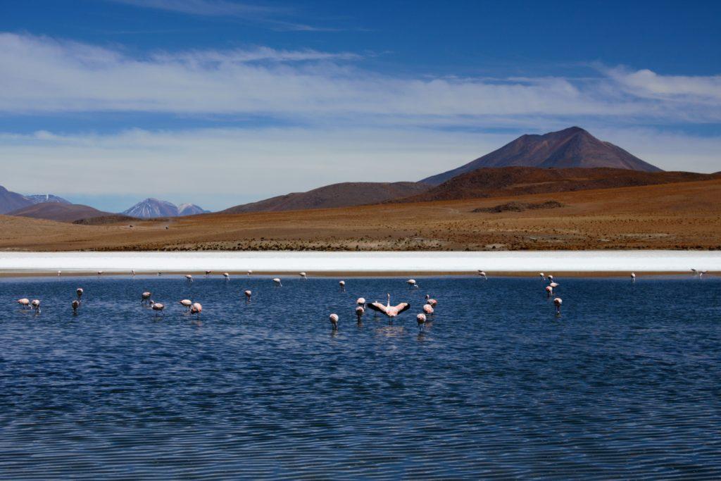 Paysage des Andes boliviennes et lagune de flamants roses